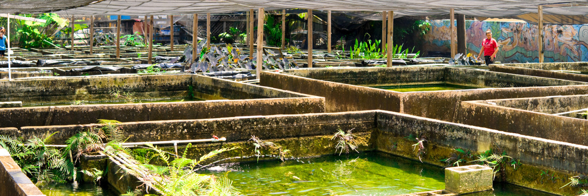 Tropical fish farm images galleries for Fish farms near me
