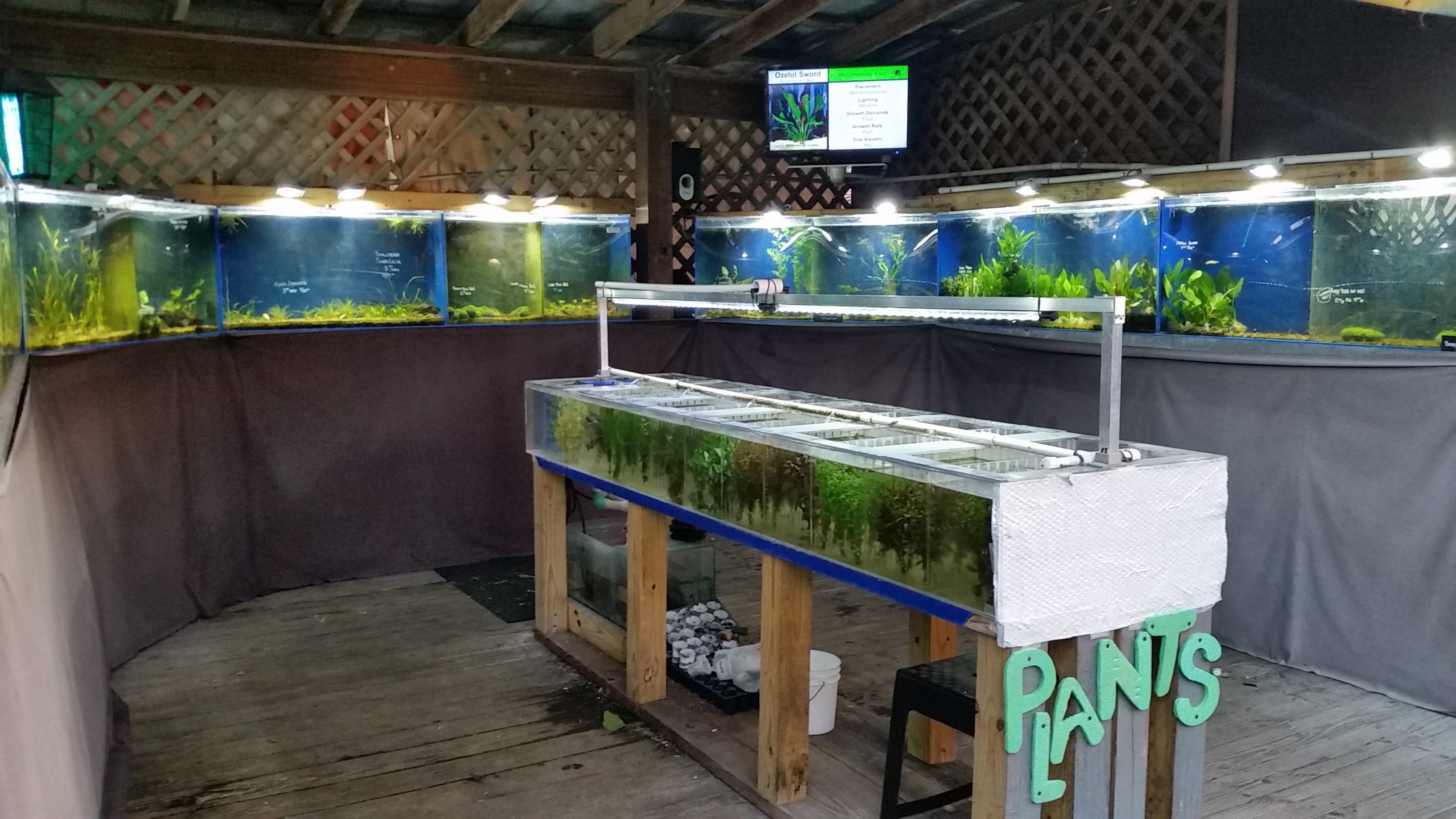New peacock cichlid arrivals and remodeled aquarium plant for Neighborhood fish farm