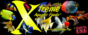 Xtreme Foods